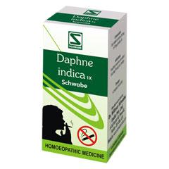 Daphne indica 1x